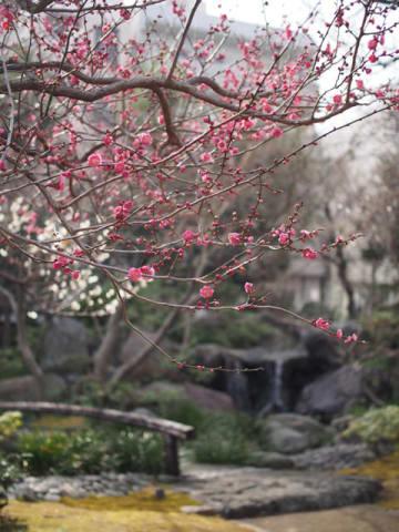 【名店発見】 中東のコロッケ「ファラフェル」がインパクト大!の春爛漫プレート