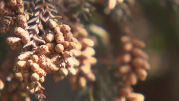 東京都心19度予想 各地でポカポカ 花粉大量飛散か
