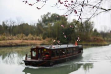 西渓湿地に早春の訪れ告げる梅の花 浙江省杭州市