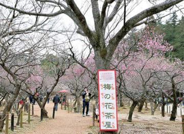 約38種、220本の梅林入口で「梅の花茶屋」おだんご販売ほか@こども自然公園