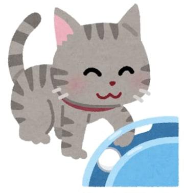 2月22日は「ネコの日」