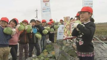 小学生が収穫体験 野菜のおいしさを学ぶ特別授業