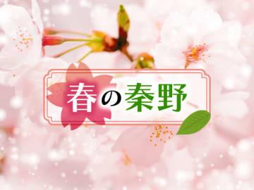 桜咲くはだの盆地を歩こう ハイキング&ランチ・スパ
