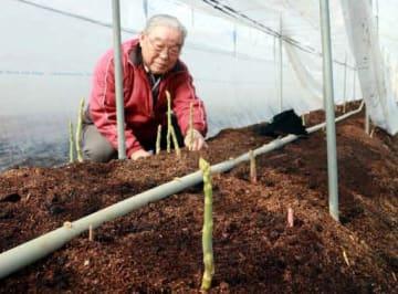 ハウスで芽を出したアスパラガスの様子を確かめる佐々木さん