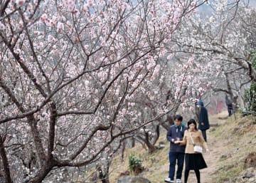 19日時点の園内 3月上旬にかけさらに咲く