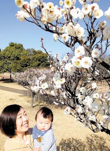 春を告げる梅林の白梅=行田市小針の古代蓮の里