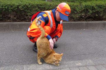 JAF 猫がクルマに入り込んでしまったトラブル1ヶ月で25件!