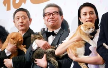 猫がかわいい~