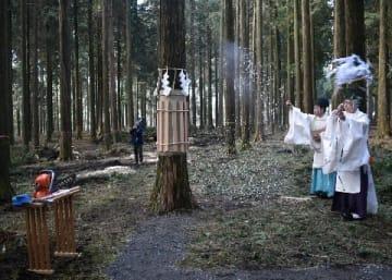 拝殿再建へ「阿蘇中央高ヒノキ」 阿蘇神社に寄贈 50本、演習林で伐採開始 [熊本県]