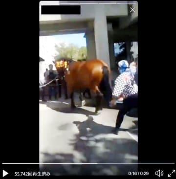 藤崎八旛宮の秋季例大祭で、男性が行列に加わる飾り馬をむち打つ動画(ツイッターから)