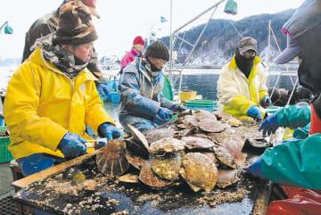 ホタテの出荷作業をする漁師たち。担い手確保の模索が続く=釜石市尾崎白浜地区