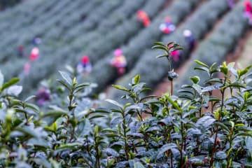 二十四節気「雨水」 中国各地で畑仕事に励む人々