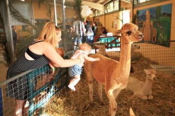 豪「ロイヤル·キャンベラ·ショー」で動物と触れ合う