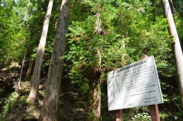 高知県内の国有林=2014年