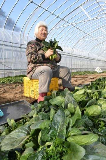 復旧したビニールハウスで収穫したホウレンソウを手に、台風10号豪雨からの日々を振り返る西倉キミさん