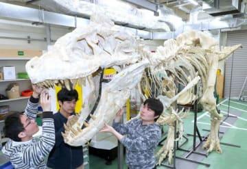 タルボサウルスの全身骨格の化石を再現した展示レプリカ=岡山理科大