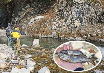【渓流でアマゴを狙う釣り人。円内は釣り上げたアマゴ(1日、和歌山県田辺市中辺路町で)】