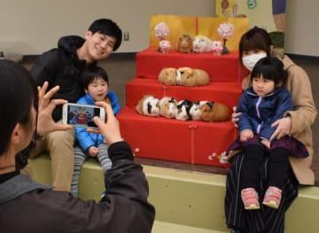 モルモットのひな壇「モル壇」と記念撮影をする参加者ら=2日、千葉市若葉区の市動物公園内ふれあい動物の里