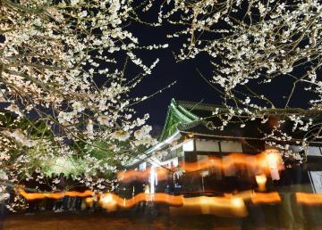 ライトアップされた弘道館の梅。ちょうちんの灯が行き交った=2日午後6時37分、水戸市三の丸