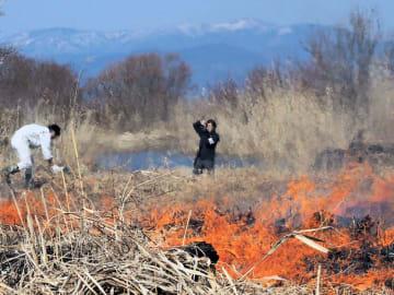 炎を上げて燃えるヨシの群落(滋賀県高島市新旭町)