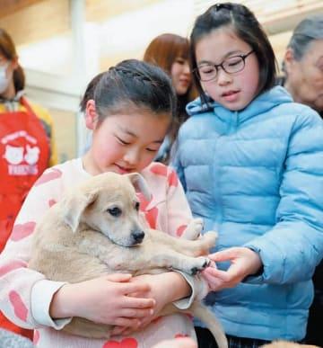 譲渡会で保護犬と触れ合う子どもたち=3日、大分市廻栖野