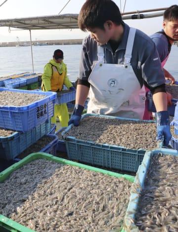 漁が解禁され、水揚げされるイカナゴの稚魚「シンコ」=5日午前、兵庫県明石市の林崎漁港