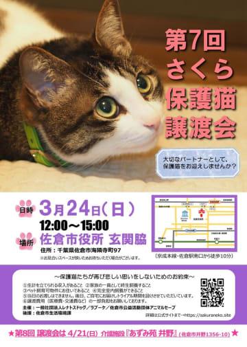 市役所で開かれる「さくら保護猫譲渡会」のチラシ