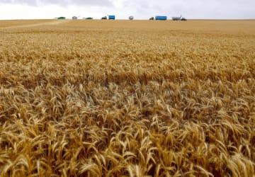 大型機械で小麦を収穫するオーストラリアの農家=ジェームズタウン(ロイター=共同)