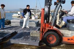 漁の解禁日に水揚げされたシンコ。不漁続きで大阪湾では休漁が決まった=5日、神戸市垂水区、垂水漁港