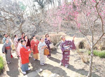 紅梅を眺める着物姿の女性ら=つくば市沼田の筑波山梅林