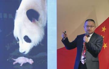 パンダの繁殖技術の向上や病気やけがから守る研究成果について講演する中国・成都ジャイアントパンダ繁育研究基地の張志和主任=9日午後、和歌山県白浜町
