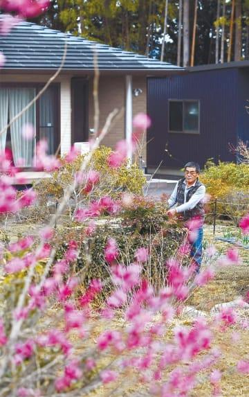 【準備】今春の避難指示解除が予定されている大熊町の大川原地区。先祖代々の農家だった井戸川清一さん(65)は一昨年、自宅を再建した。昨年4月に準備宿泊を始め「生まれ育った町はやっぱり安心できる」