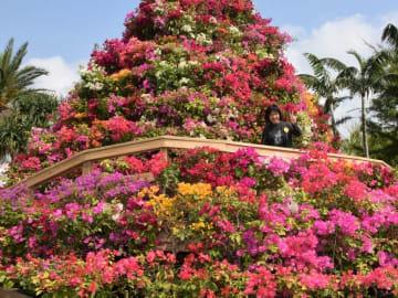 東南植物楽園で開催中「ブーゲンフェア」