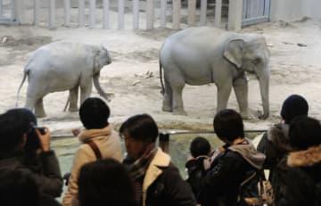 一般公開されたアジアゾウのシュティン(右)とニャイン=12日午後、札幌市の円山動物園