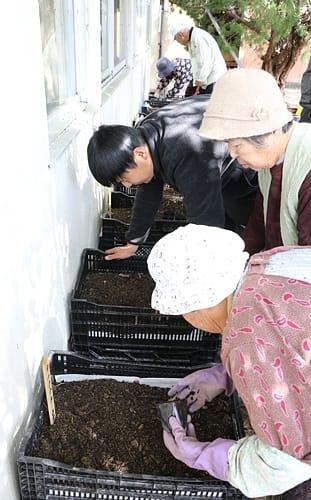 【キイジョウロウホトトギスの苗をコンテナに植える関係者(14日、和歌山県みなべ町清川で)】