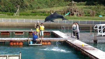 イルカのジャンプと記念撮影をした室伏さん夫妻と石垣さん親子=壱岐市勝本町(壱岐イルカパーク提供)