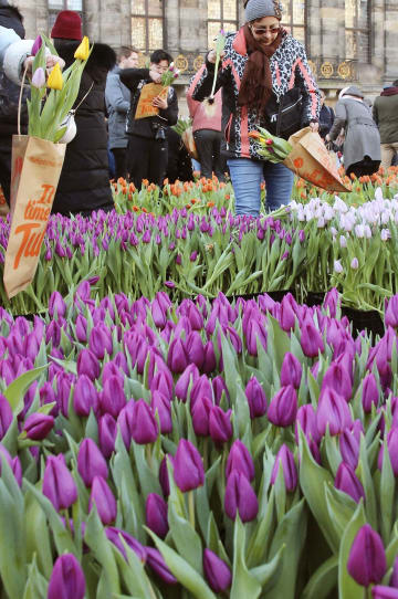 オランダ・アムステルダムでチューリップ業界団体が輸出振興などのために開催した「チューリップの日」イベント=1月(共同)