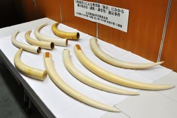 国内の違法取引事件で警視庁が押収した象牙=2017年8月、警視庁万世橋署