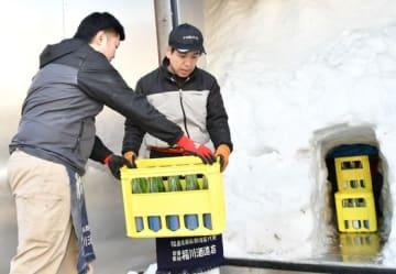 雪室に日本酒を運び入れる担当者