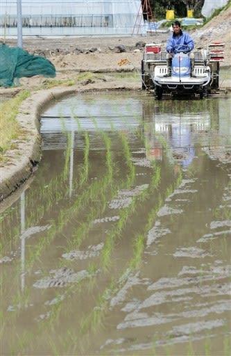 早期米の田植えが始まり、緑色の早苗の列をつくる倉田晋一さんの水田=18日午前、天草市河浦町
