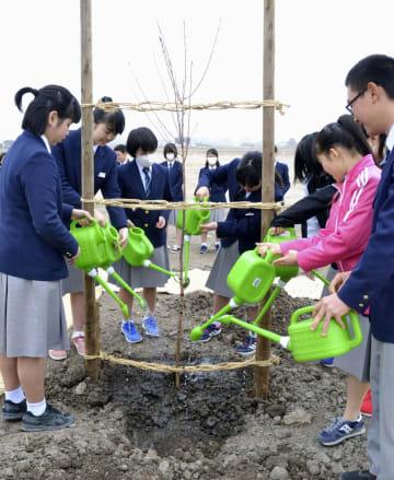 「宇宙桜」の苗木に水をやる市立閖上小中の卒業生ら=21日、宮城県名取市