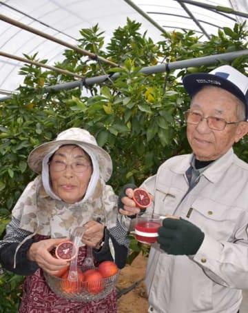 ブラッドオレンジを栽培している酒井清さん(右)と妻の洋子さん