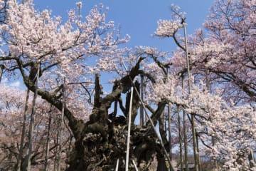 桜の名所は数多くありますが、そんな中で「日本三大桜」「五大桜」、さらには「三大桜の名所」に数えられる所があります。