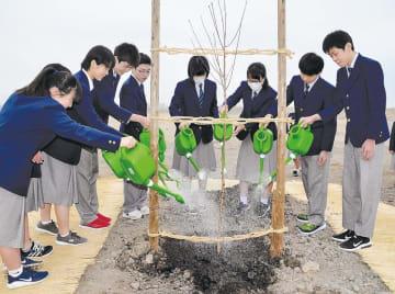 植樹した桜に水をやる閖上小中の生徒