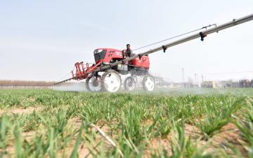 麦畑での農作業が本格化 河北省定州市