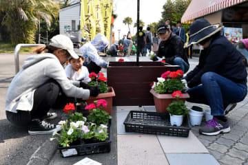 「青島まるごとフラワーフェスタ」の開幕に合わせて行われた植栽活動