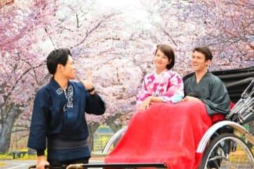 日本情緒溢れるお花見人力車