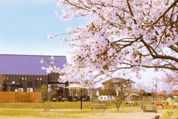 武平作の栃木本店で「春のお花見会」を開催 花見団子セットや焼き立ての桜餅を販売