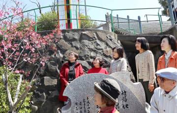 桜を愛でる参加者=長崎市平野町