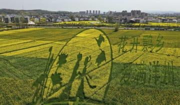 菜の花が彩る「畑アート」 陝西省洋県